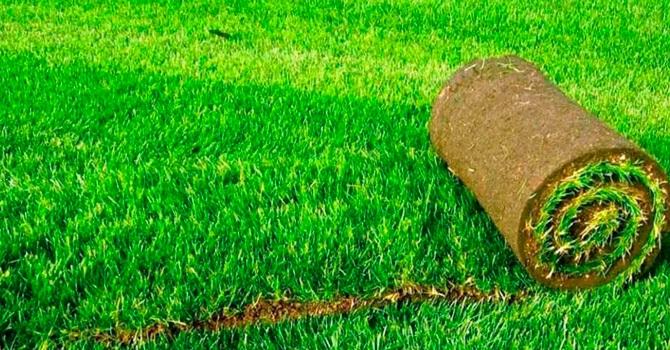 Аккуратный яркий сверток рулонного газона