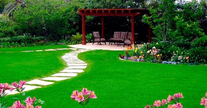 Декоративный газон для оформления участка