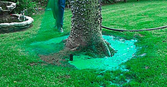 Гидропосев газонной травы