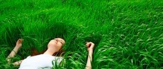 Какой газон лучше посадить на даче