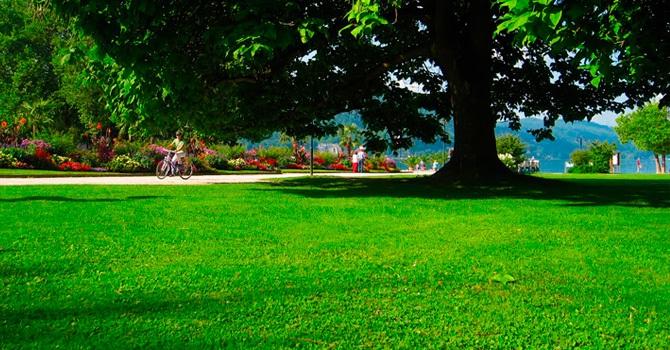 Парковые поляны успешны для проверки на прочность