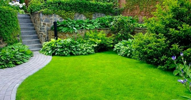 Партерный газон для украшения парадных участков