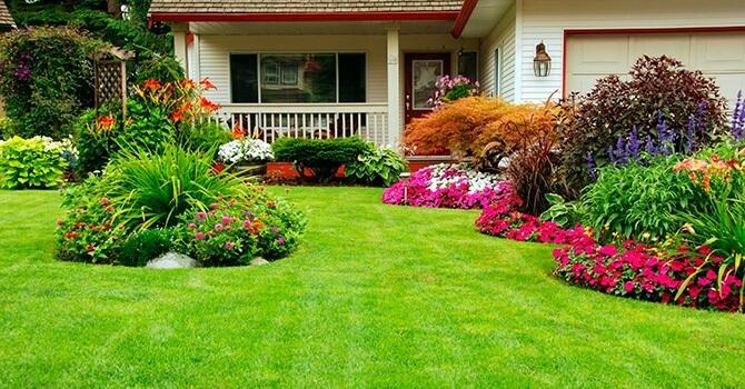 Как сделать газон возле дома