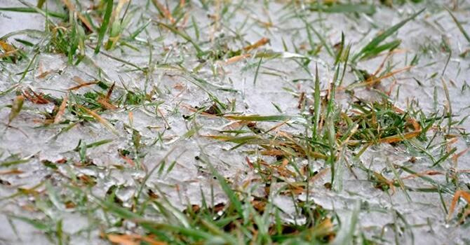 Ледяная корка на газоне