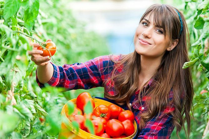 Гидропоника – урожай без хлопот
