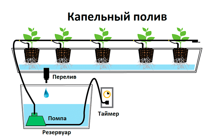 Капельный полив в гидропонике