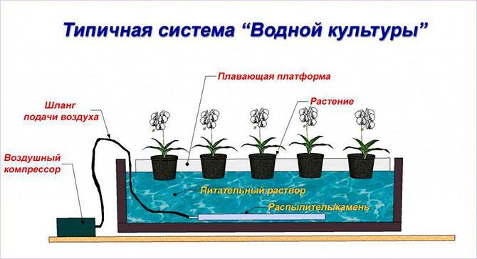 Плавающая платформа как разновидность гидропоники