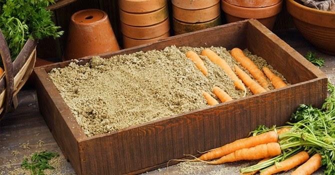Храним морковь в песке