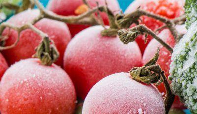 Заготовка томатов на зиму