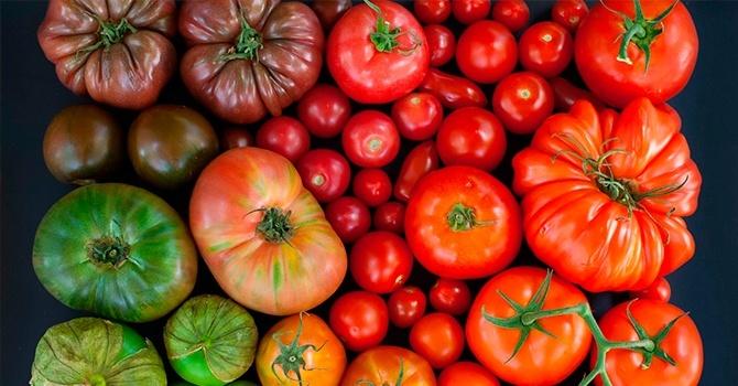 Как помидоры влияют на организм