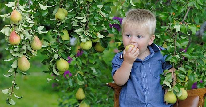 Сладкие фрукты из своего сада
