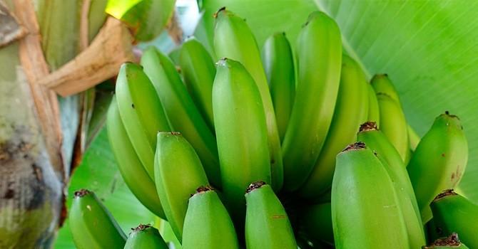 Среди сортов банана есть особый зеленый