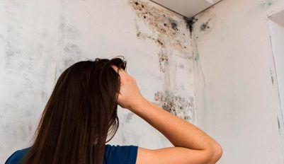 Что делать, когда появляется плесень на стене в квартире