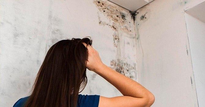Разберем, что делать, когда появляется плесень на стене в квартире