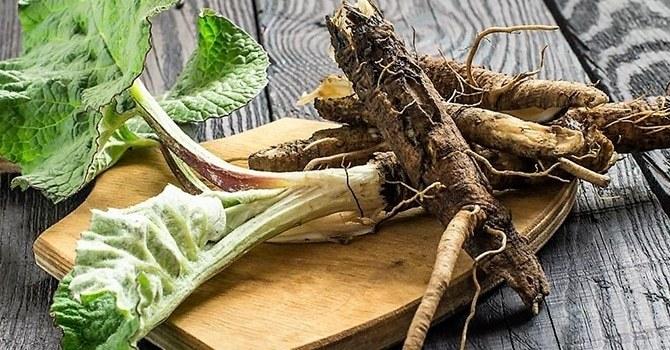 Насыщенные витаминами корни репейника
