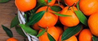 Мандарины: разберем пользу и вред для здоровья человека