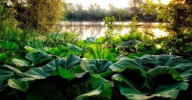 Распространенное растение в природе