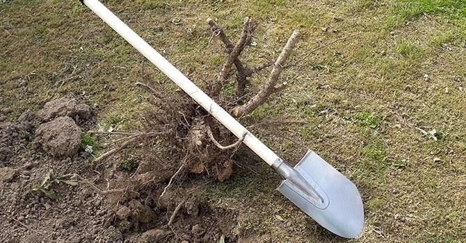 Легкая и прочная лопата из титана