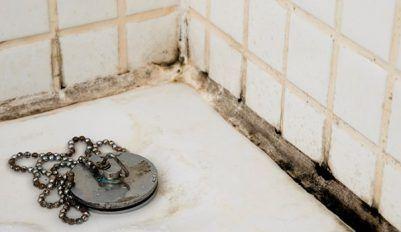 Как избавиться от плесени в ванной и не допустить ее нового появления