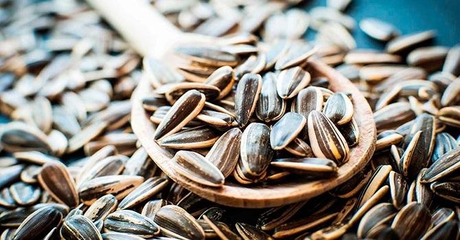 Лечебные свойства семян подсолнечника