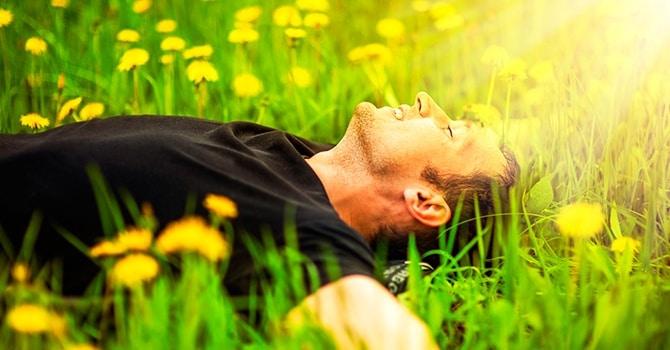 Цветки одуванчика полезны для мужского здоровья