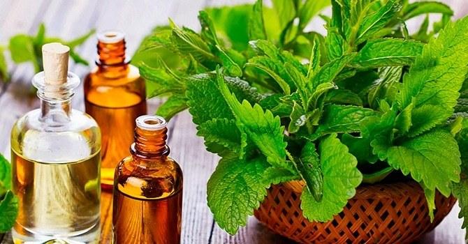 Природные средства широко используются в препаратах для здоровья и молодости