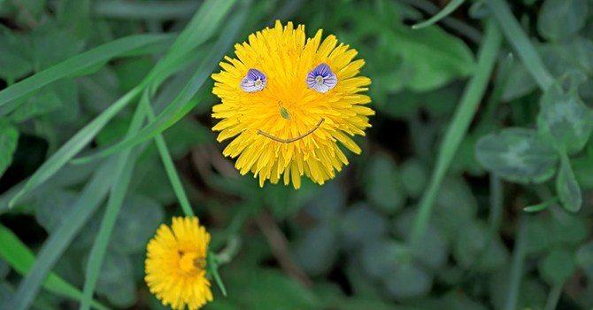 Весенне-летняя улыбка природы