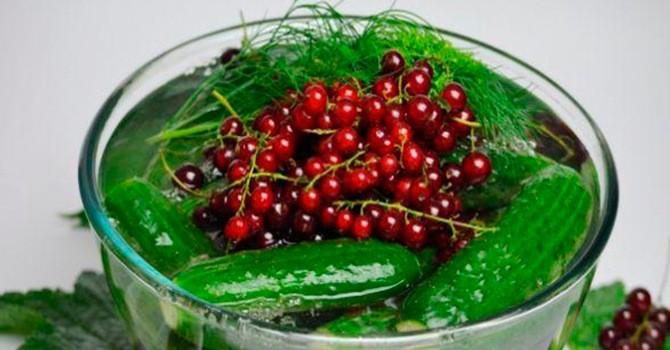 Рецепт с варенья из огурцов