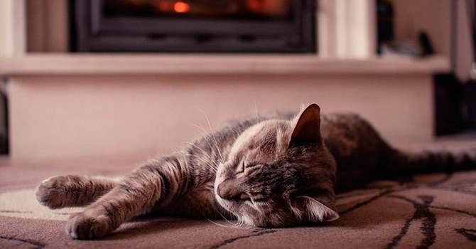 Домашние животные делают дом уютнее и снижают чувство тревоги