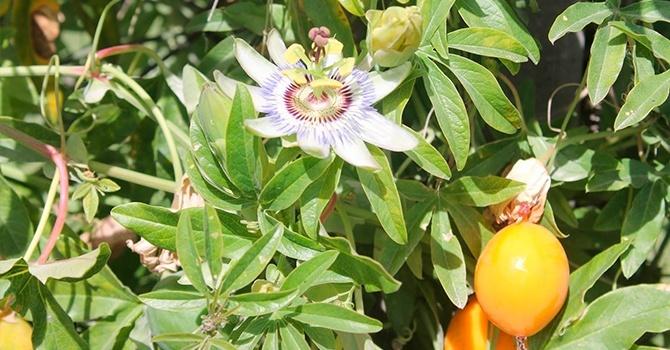 Экзотические фрукты на нашем столе