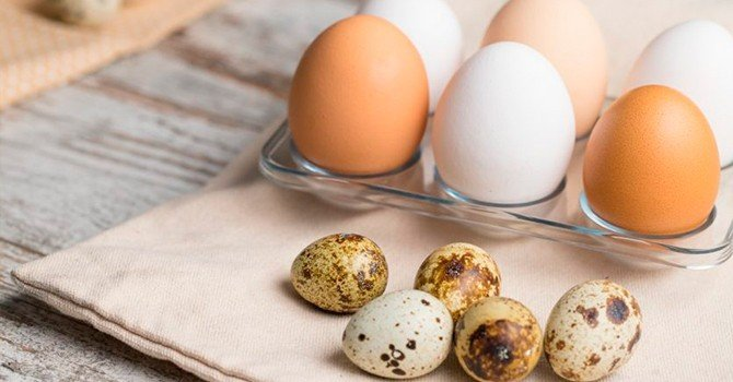 Отличие мелких перепелиных яиц от крупных куриных