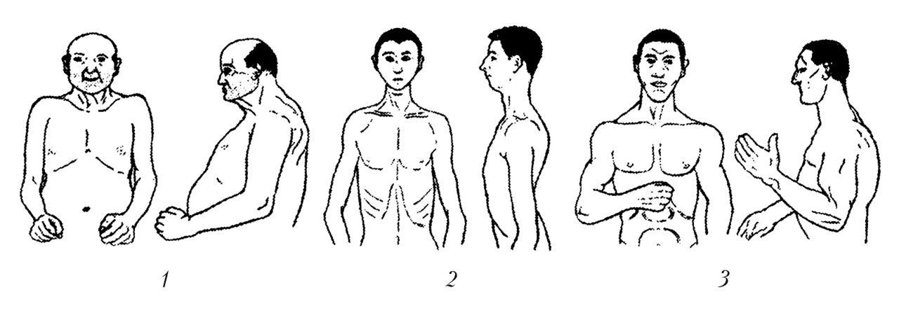 Типология характера человека по Кречмеру