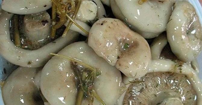 Маринованные грузди, рецепт приготовления на зиму