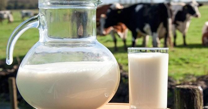 Польза и вред парного коровьего молока для организма человека