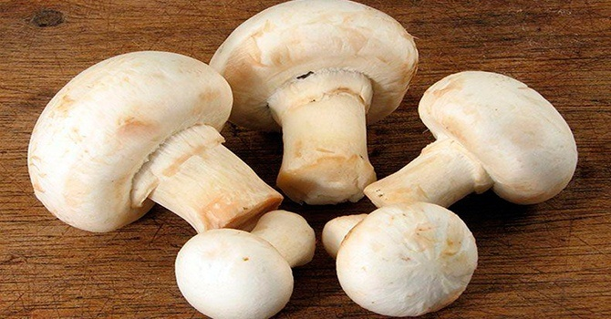 можно ли есть сырые грибы шампиньоны
