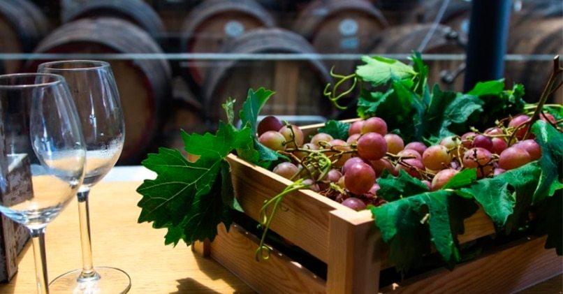 Виноградные грозди с лозой