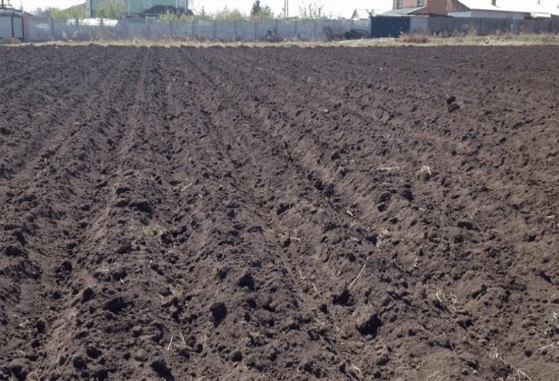 Как подготовить почву под картошку