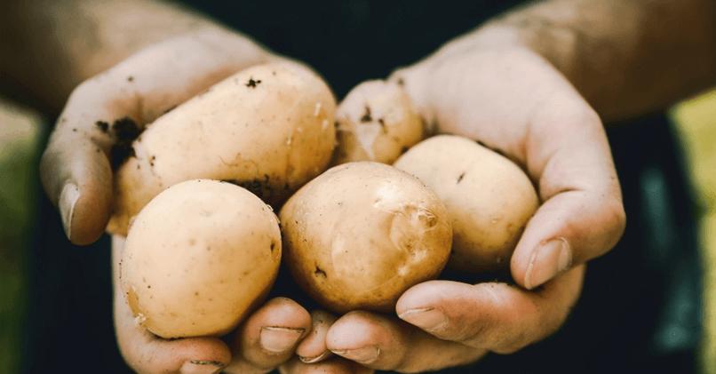 Мужчина знает, как сажать картошку