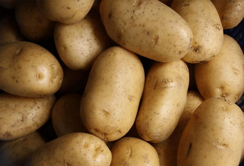 Посадочный картофель для хорошего урожая