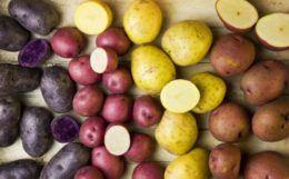 Какой картофель самый вкусный список сортов по алфавиту с фото и описанием