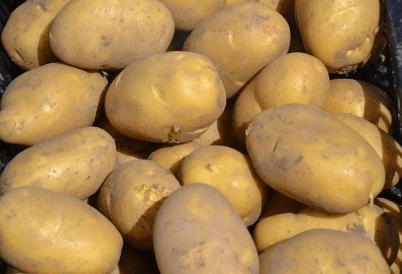 Картофель Бернина