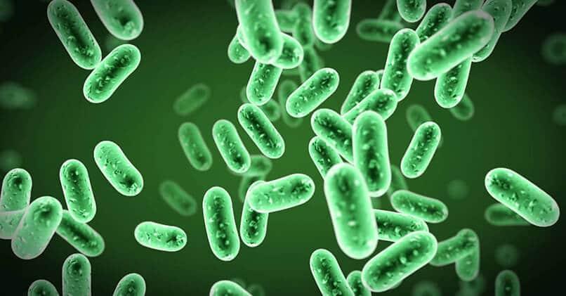 Прокариоты и эукариоты – кто это такие и в чем между ними разница