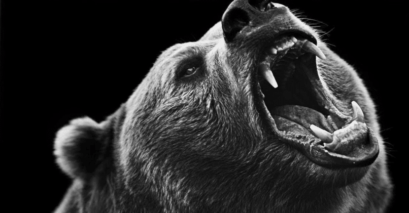 Что такое медвежий тренд понятным языком