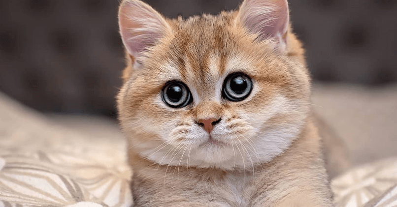 Как назвать кошку