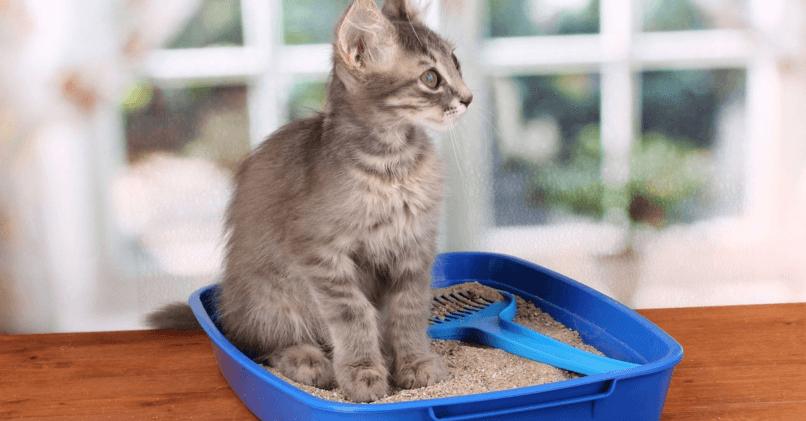 Как приучить кошку к лотку