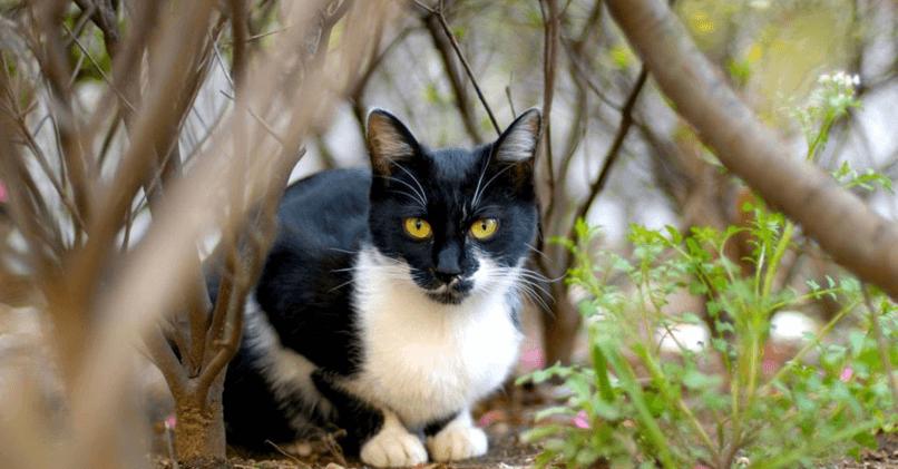 Как поймать кошку