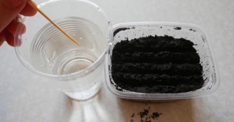 Высаживаем семена зубочисткой