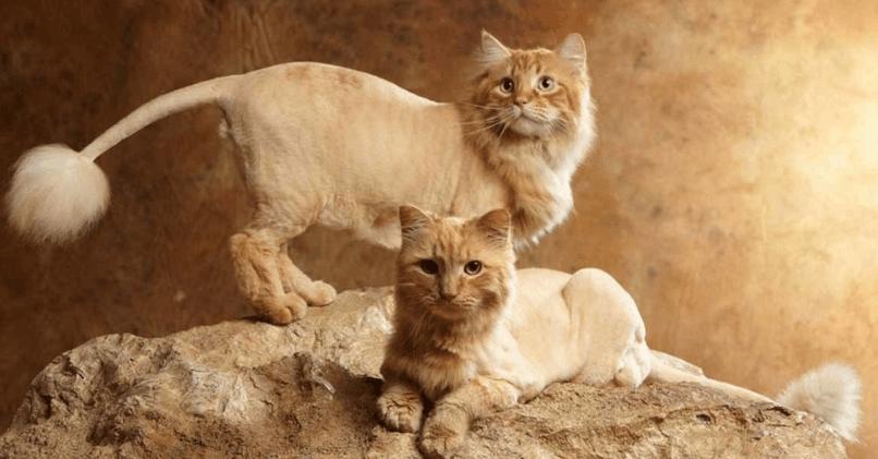 Как подстричь кошку